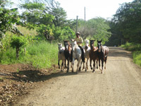 Daylife in Guanacaste